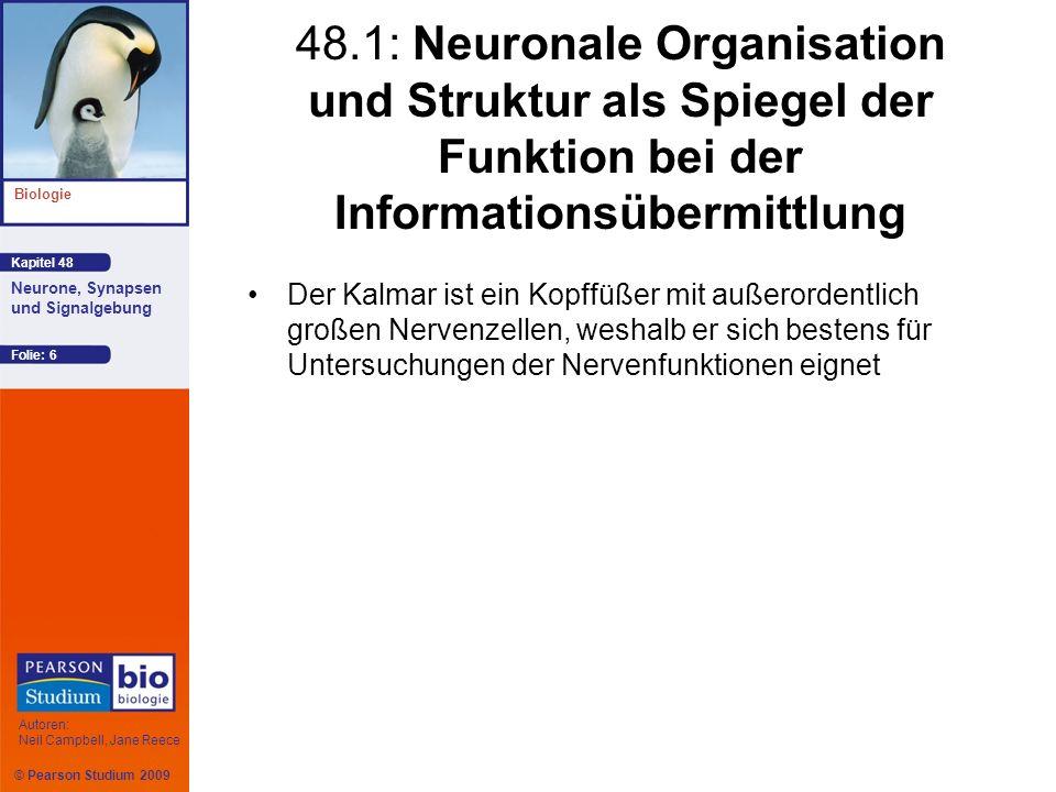 48.1: Neuronale Organisation und Struktur als Spiegel der Funktion bei der Informationsübermittlung