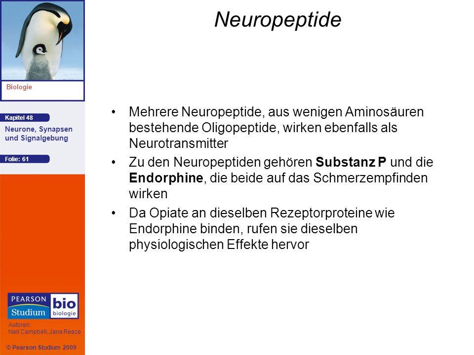 Neuropeptide Mehrere Neuropeptide, aus wenigen Aminosäuren bestehende Oligopeptide, wirken ebenfalls als Neurotransmitter.