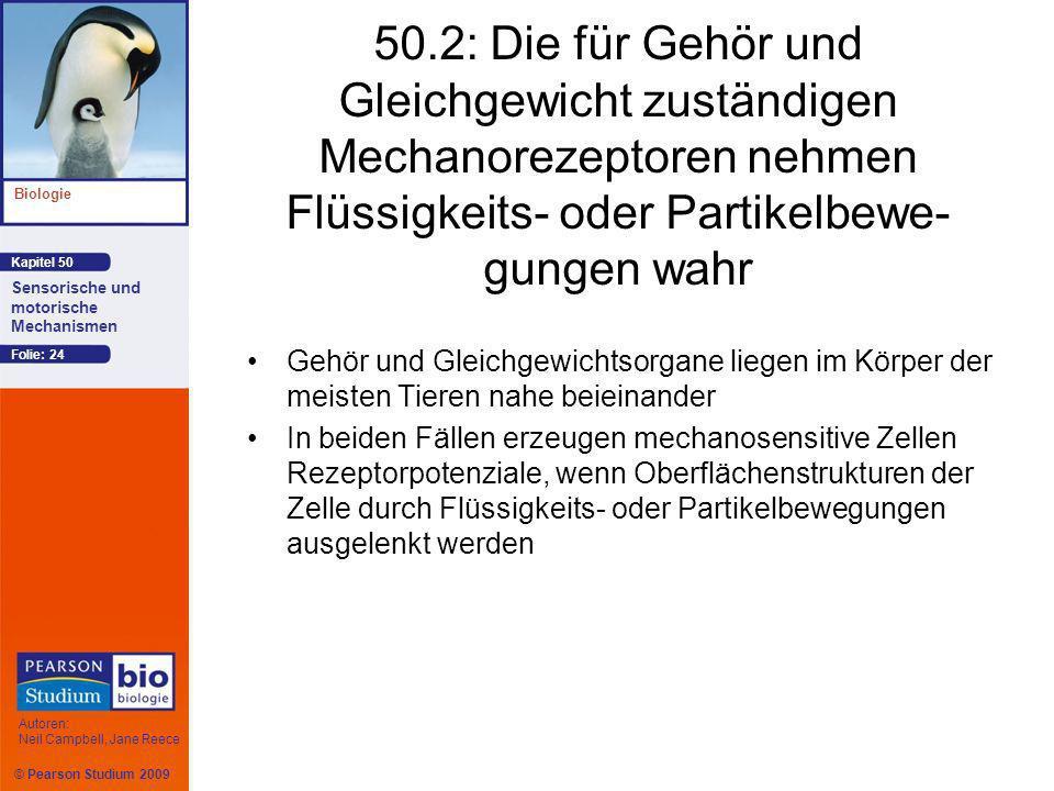 50.2: Die für Gehör und Gleichgewicht zuständigen Mechanorezeptoren nehmen Flüssigkeits- oder Partikelbewe-gungen wahr