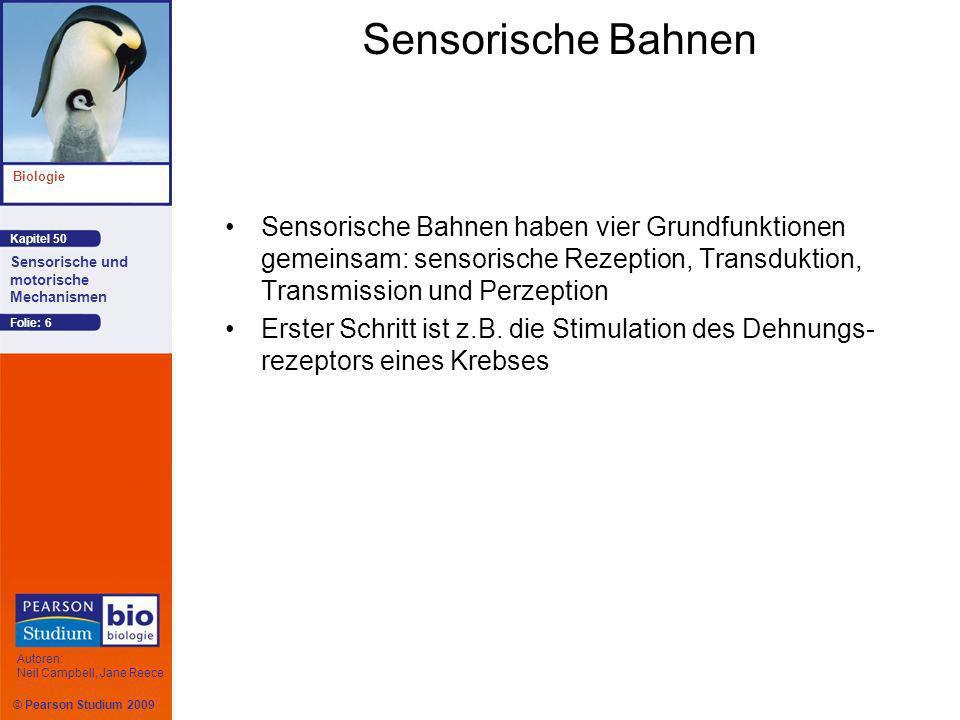 Sensorische Bahnen Sensorische Bahnen haben vier Grundfunktionen gemeinsam: sensorische Rezeption, Transduktion, Transmission und Perzeption.