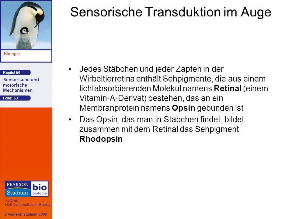 Sensorische Transduktion im Auge