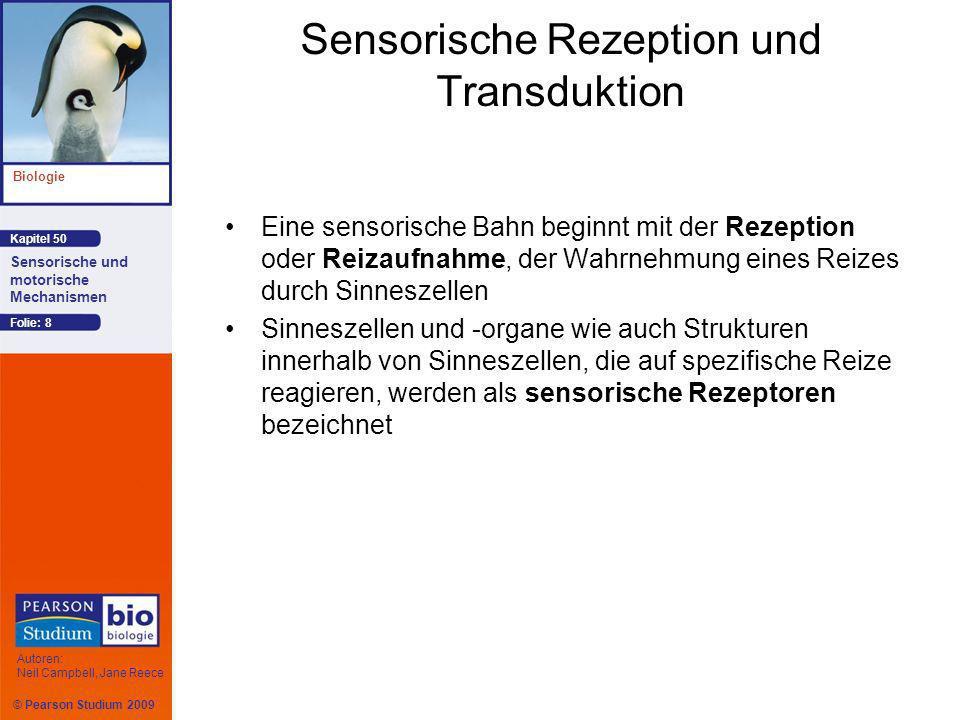 Sensorische Rezeption und Transduktion
