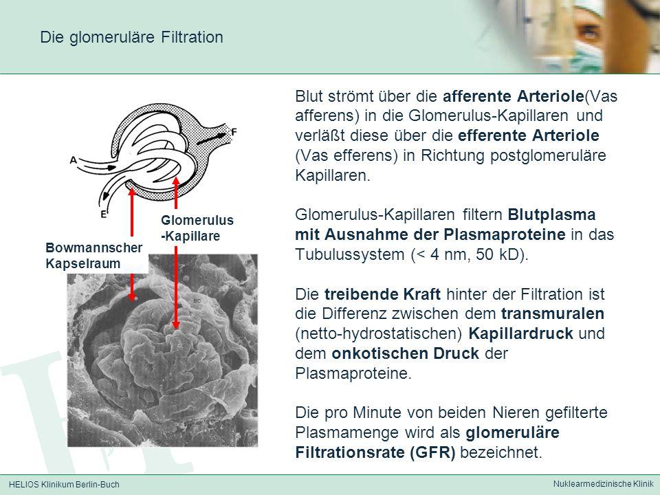 Die glomeruläre Filtration