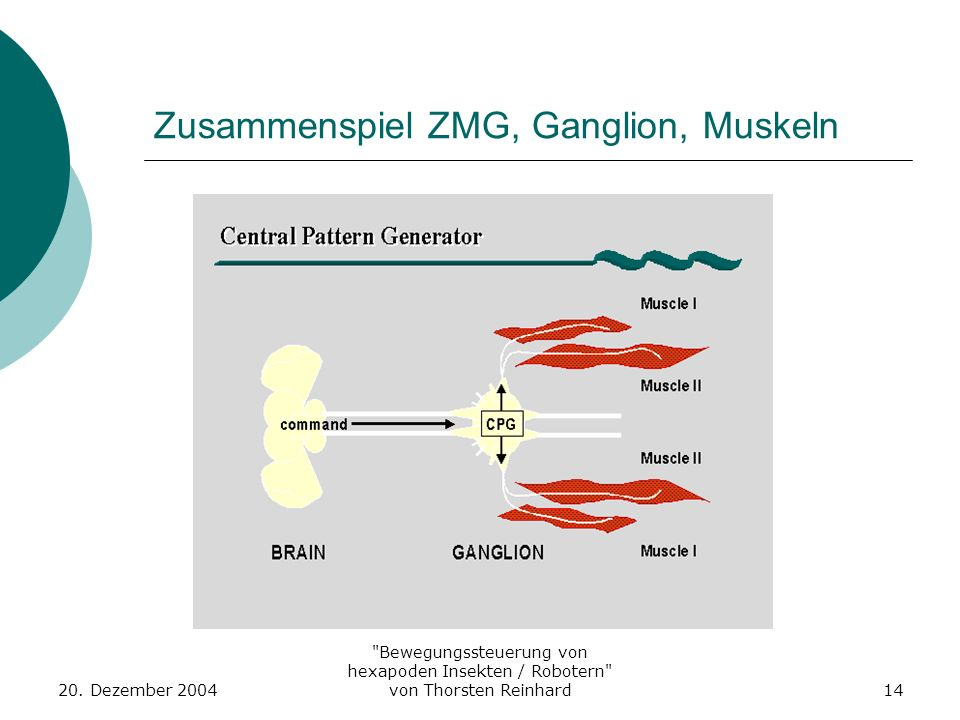 Zusammenspiel ZMG, Ganglion, Muskeln