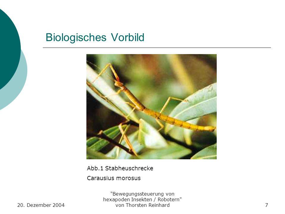 Biologisches Vorbild Abb.1 Stabheuschrecke Carausius morosus