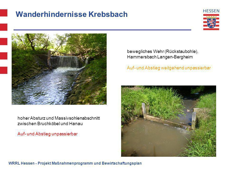 Wanderhindernisse Krebsbach