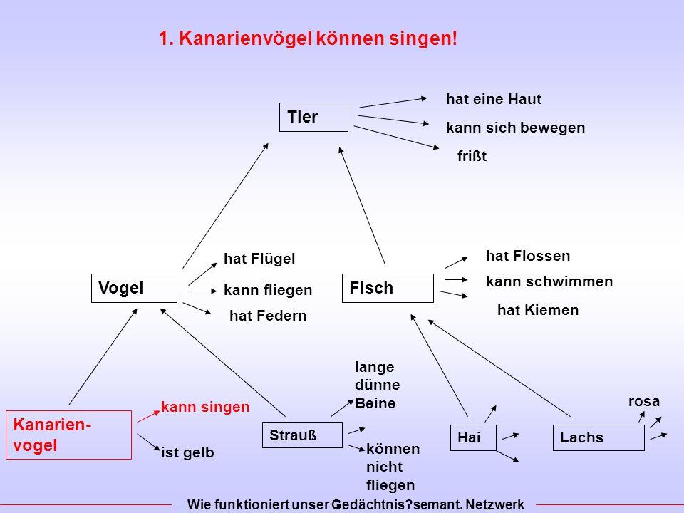 1. Kanarienvögel können singen!