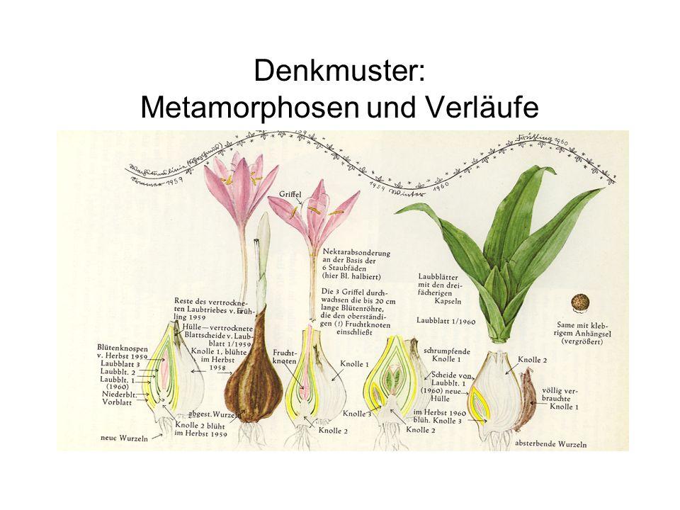 Denkmuster: Metamorphosen und Verläufe