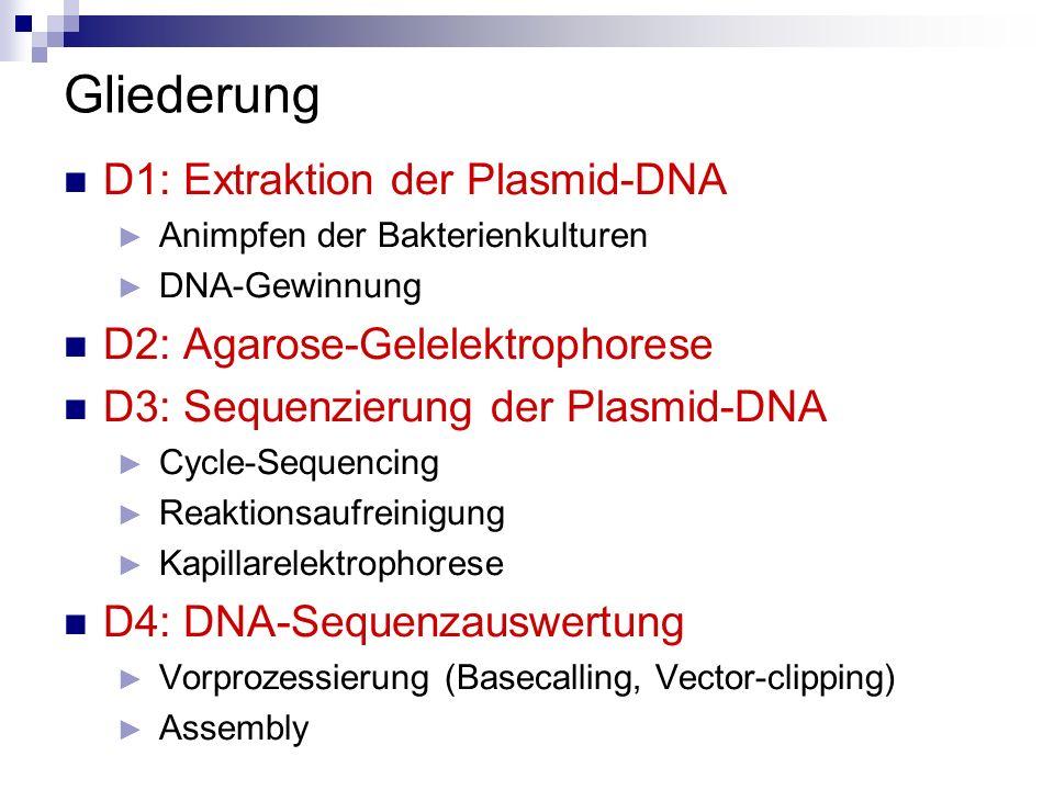 Gliederung D1: Extraktion der Plasmid-DNA