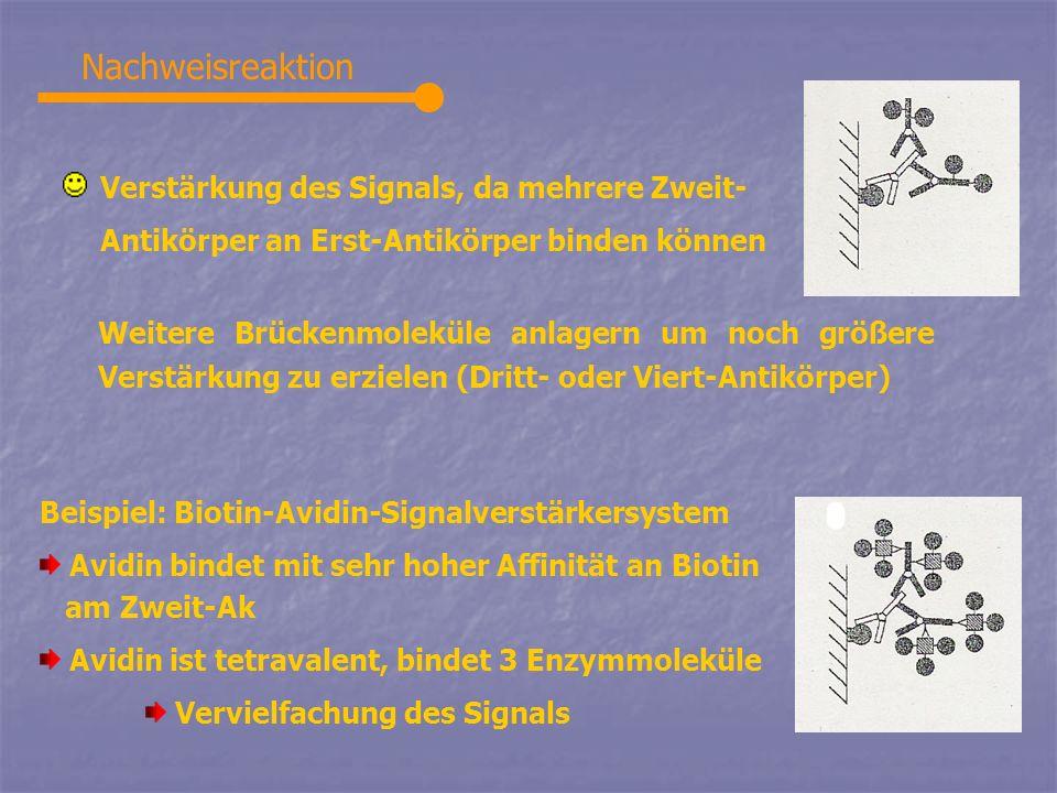 Nachweisreaktion Verstärkung des Signals, da mehrere Zweit-