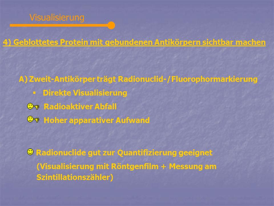 Visualisierung 4) Geblottetes Protein mit gebundenen Antikörpern sichtbar machen. Zweit-Antikörper trägt Radionuclid-/Fluorophormarkierung.