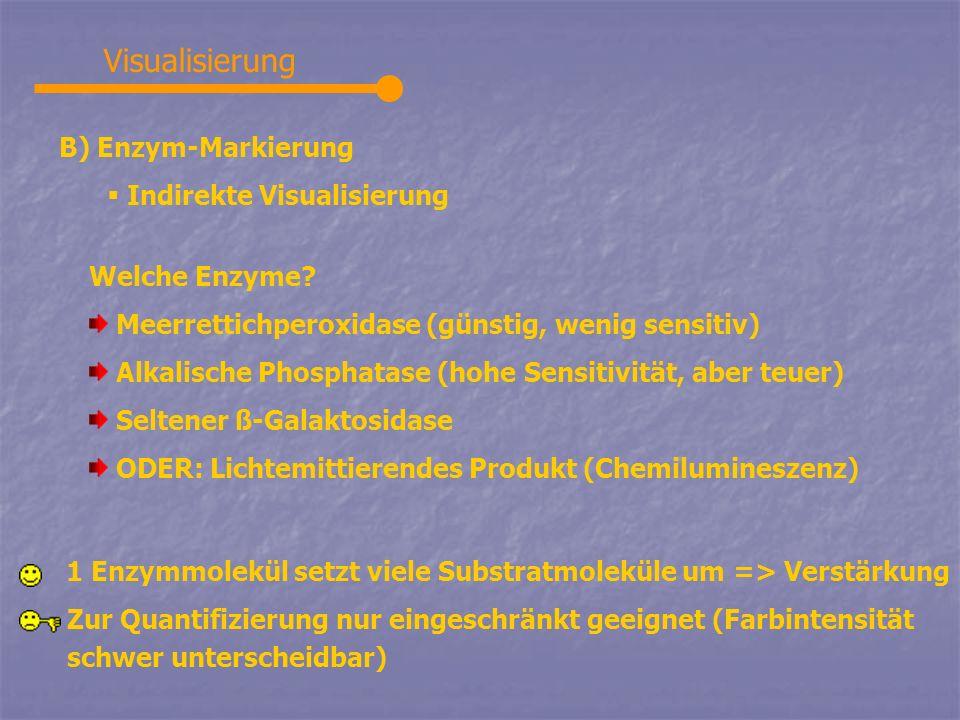Visualisierung B) Enzym-Markierung Indirekte Visualisierung