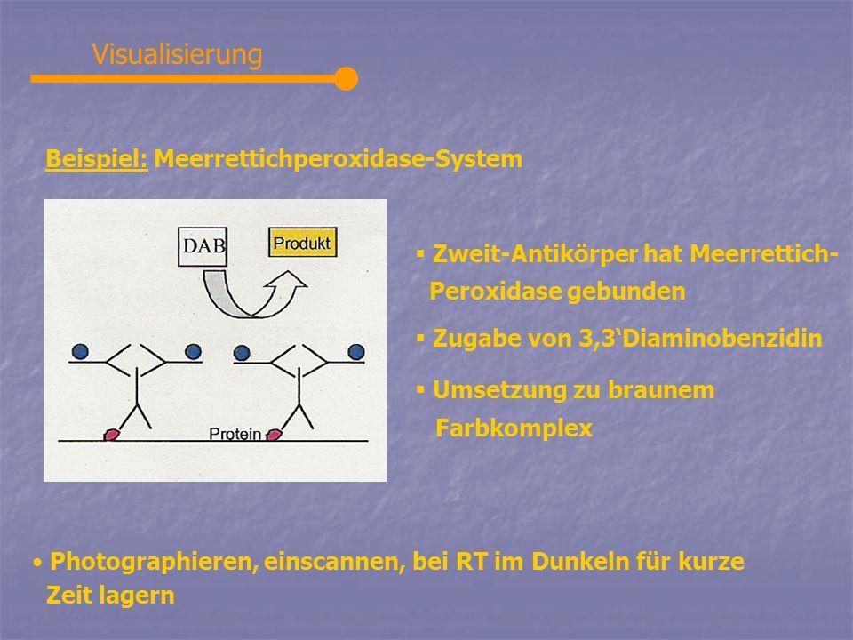 Visualisierung Beispiel: Meerrettichperoxidase-System