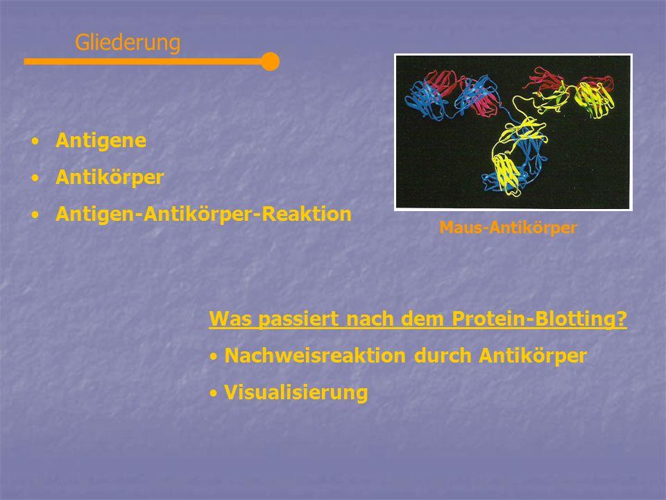 Gliederung Antigene Antikörper Antigen-Antikörper-Reaktion