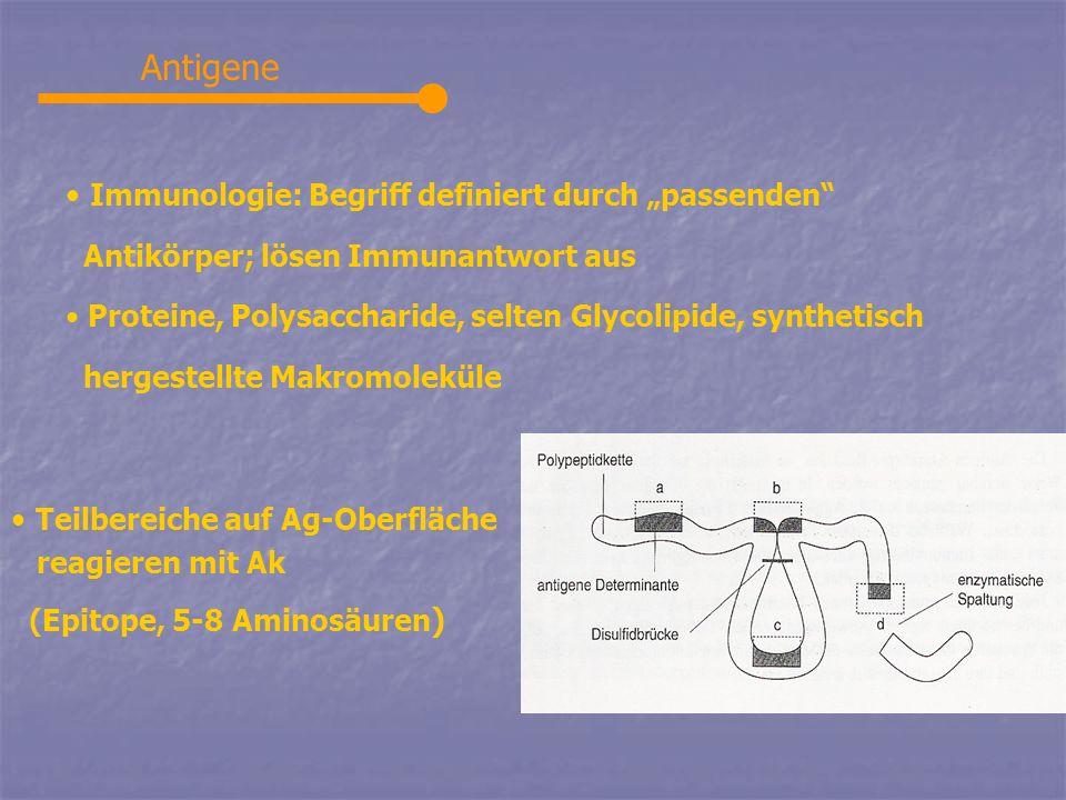"""Antigene Immunologie: Begriff definiert durch """"passenden"""