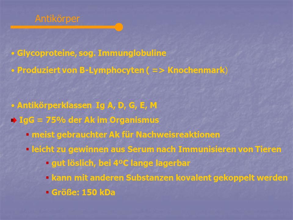 Antikörper Glycoproteine, sog. Immunglobuline