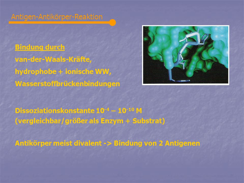 Antigen-Antikörper-Reaktion