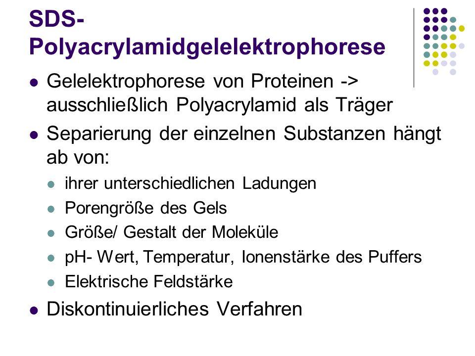 SDS- Polyacrylamidgelelektrophorese