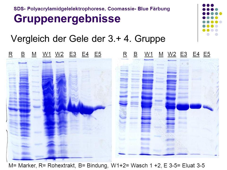 Vergleich der Gele der 3.+ 4. Gruppe