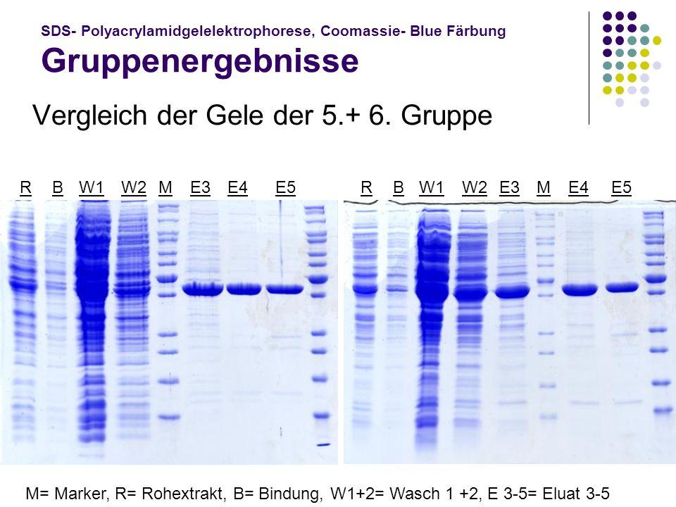 Vergleich der Gele der 5.+ 6. Gruppe