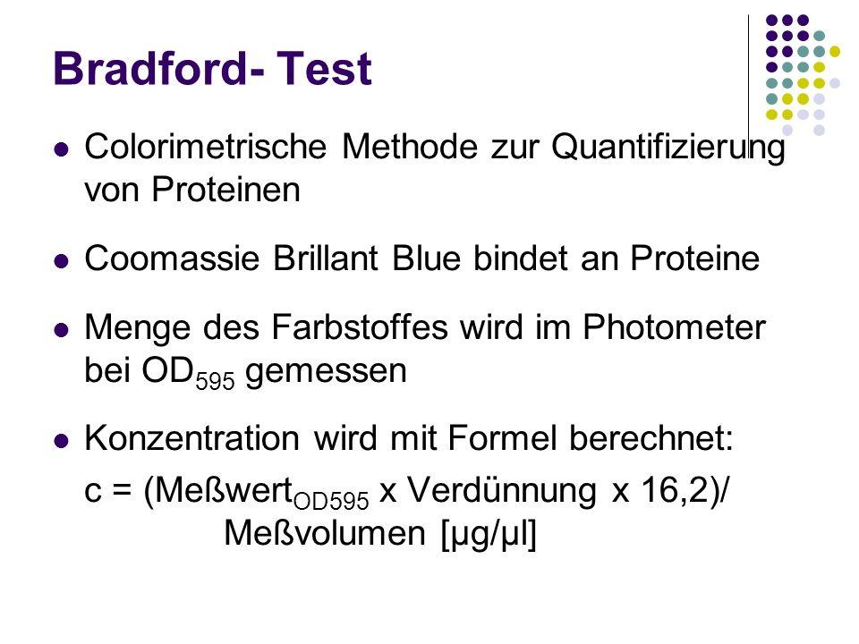 Bradford- Test Colorimetrische Methode zur Quantifizierung von Proteinen. Coomassie Brillant Blue bindet an Proteine.