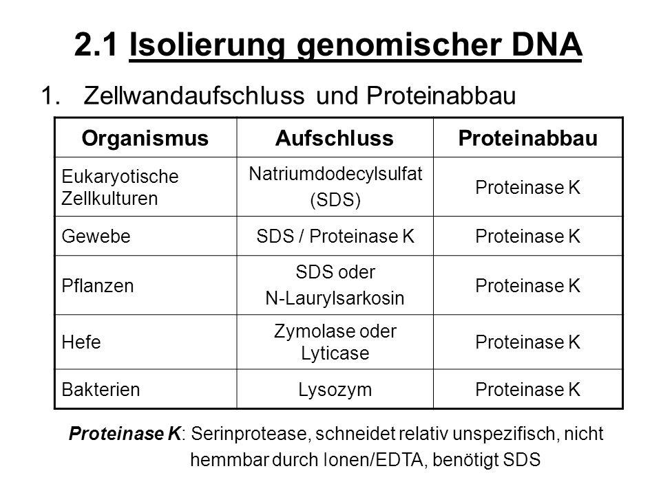 2.1 Isolierung genomischer DNA