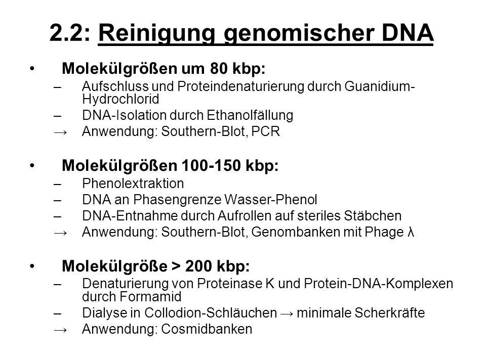 2.2: Reinigung genomischer DNA