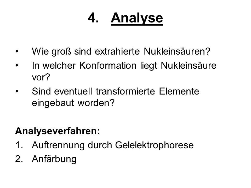 Analyse Wie groß sind extrahierte Nukleinsäuren