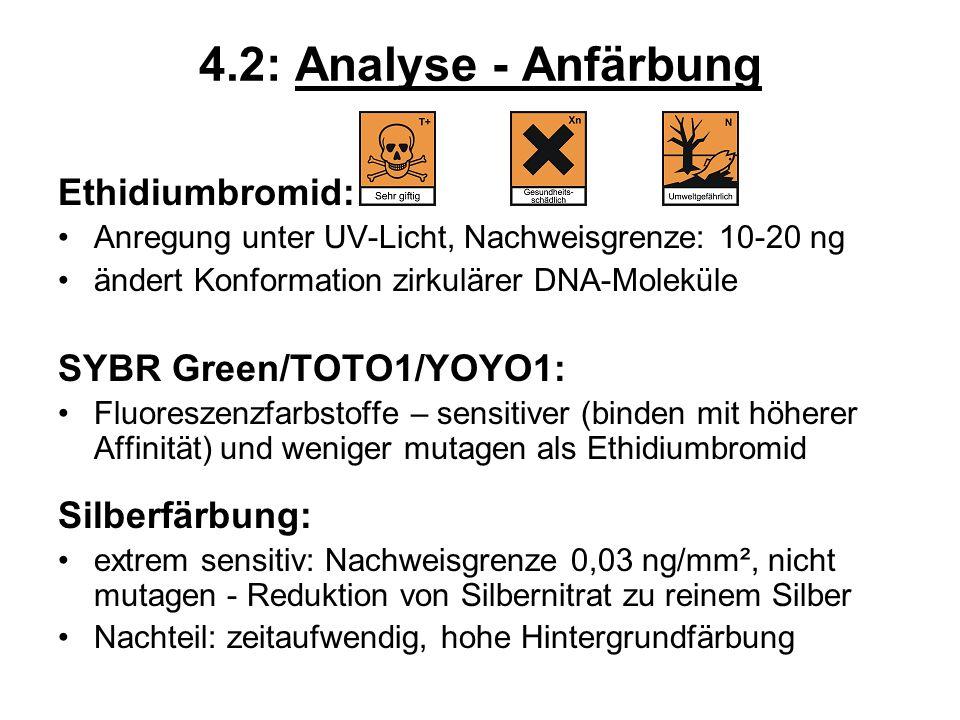 4.2: Analyse - Anfärbung Ethidiumbromid: SYBR Green/TOTO1/YOYO1: