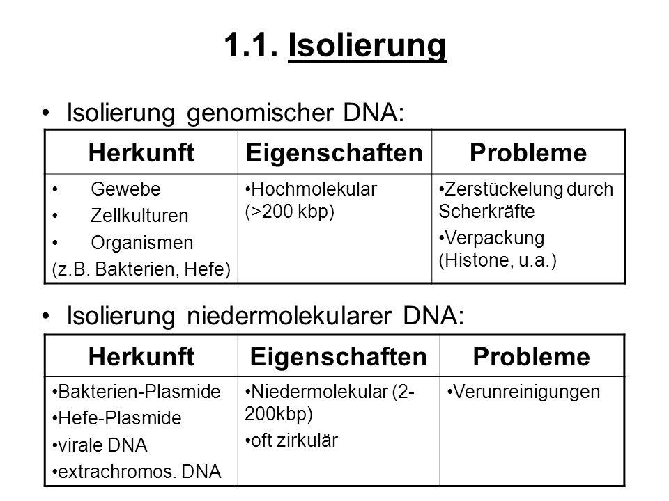 1.1. Isolierung Isolierung genomischer DNA: