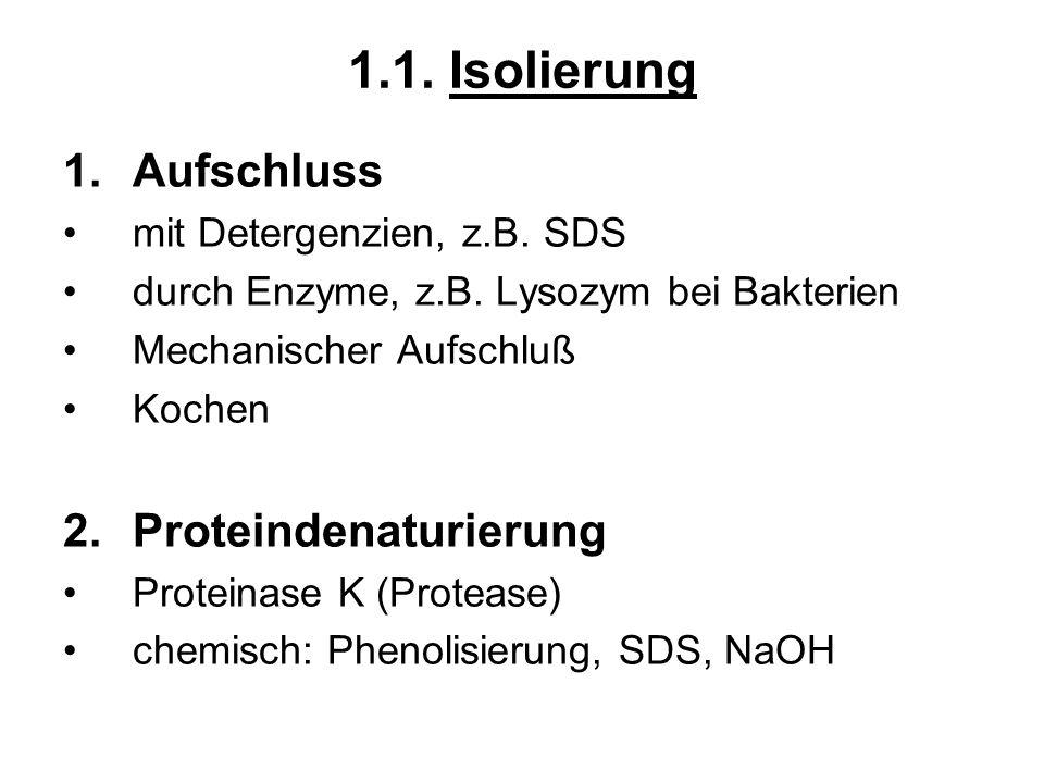 1.1. Isolierung Aufschluss Proteindenaturierung