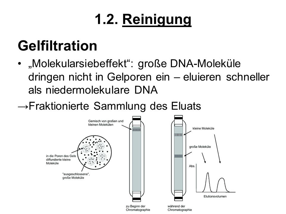 1.2. Reinigung Gelfiltration