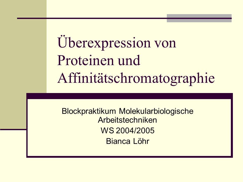 Überexpression von Proteinen und Affinitätschromatographie