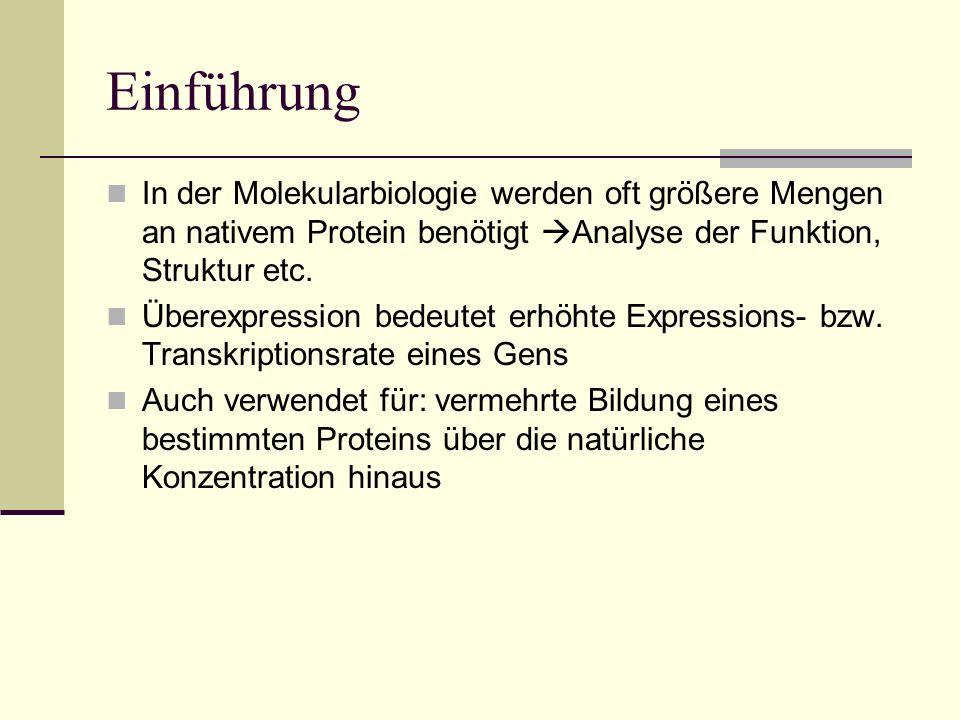 Einführung In der Molekularbiologie werden oft größere Mengen an nativem Protein benötigt Analyse der Funktion, Struktur etc.
