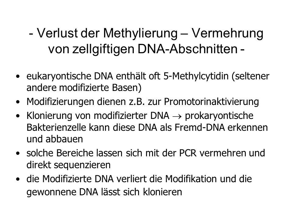 - Verlust der Methylierung – Vermehrung von zellgiftigen DNA-Abschnitten -