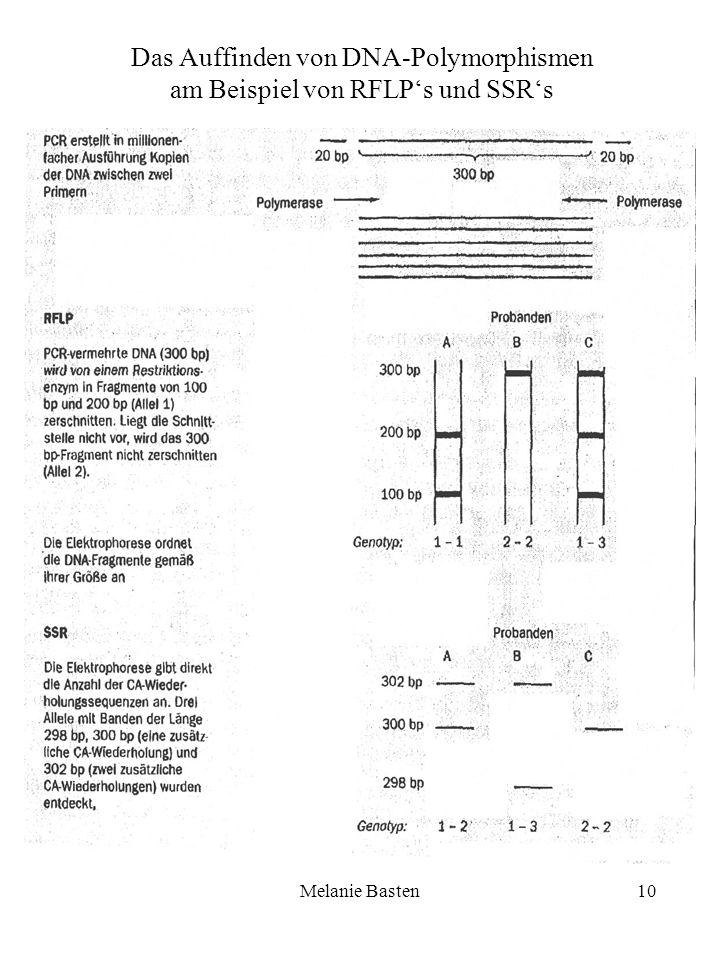 Das Auffinden von DNA-Polymorphismen am Beispiel von RFLP's und SSR's