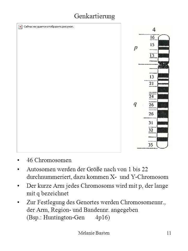 Genkartierung 46 Chromosomen