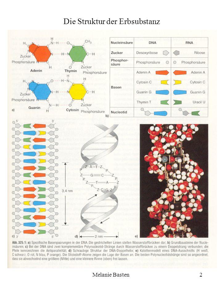 Die Struktur der Erbsubstanz