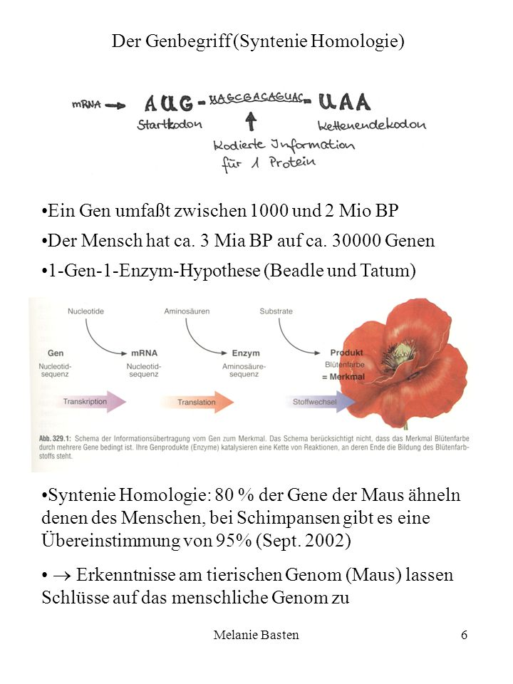 Der Genbegriff (Syntenie Homologie)