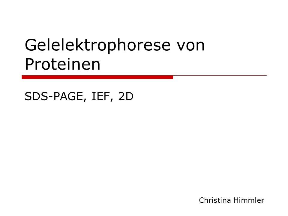 Gelelektrophorese von Proteinen