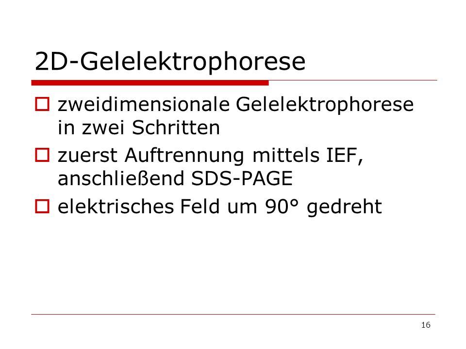 2D-Gelelektrophorese zweidimensionale Gelelektrophorese in zwei Schritten. zuerst Auftrennung mittels IEF, anschließend SDS-PAGE.