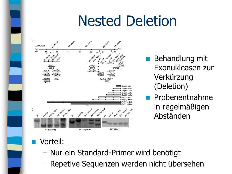 Nested Deletion Behandlung mit Exonukleasen zur Verkürzung (Deletion)