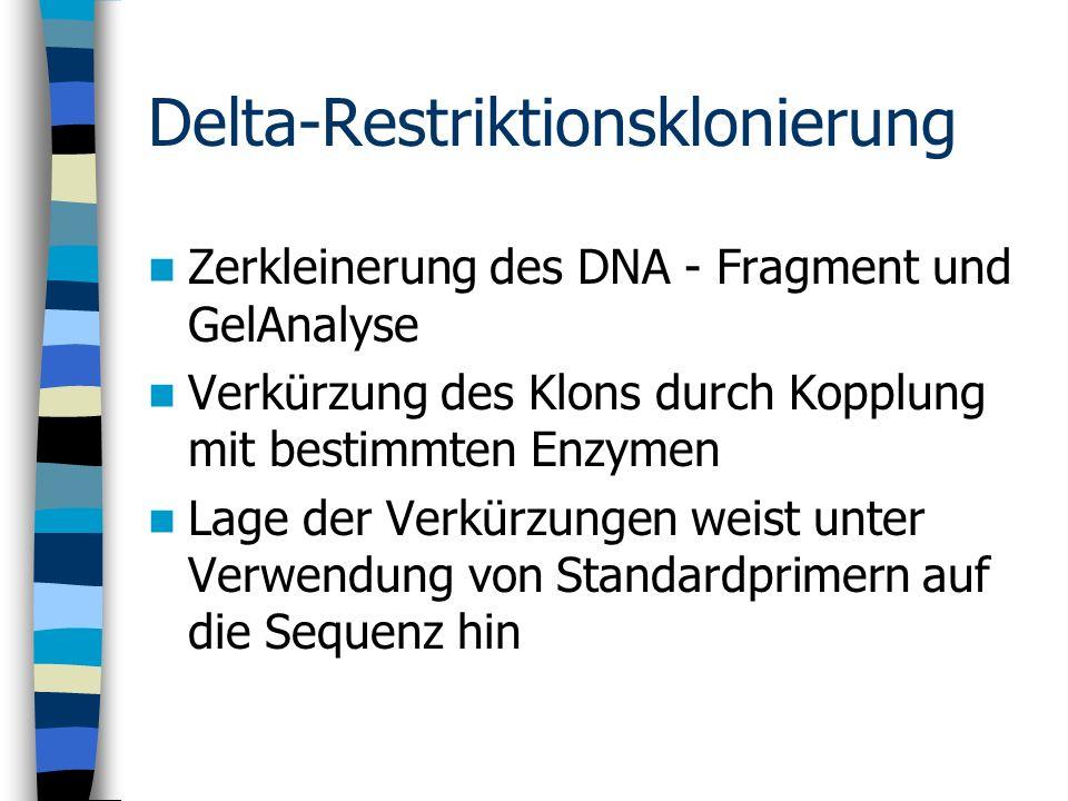 Delta-Restriktionsklonierung