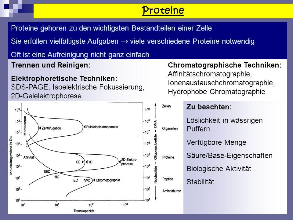 Proteine Proteine gehören zu den wichtigsten Bestandteilen einer Zelle