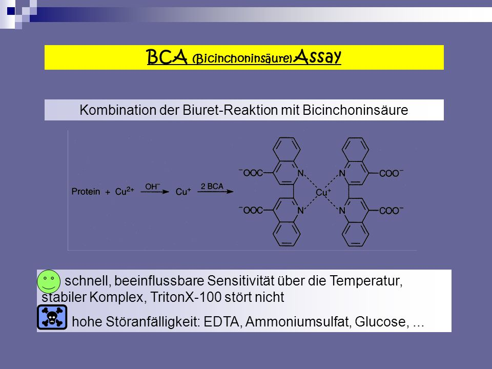 BCA (Bicinchoninsäure) Assay
