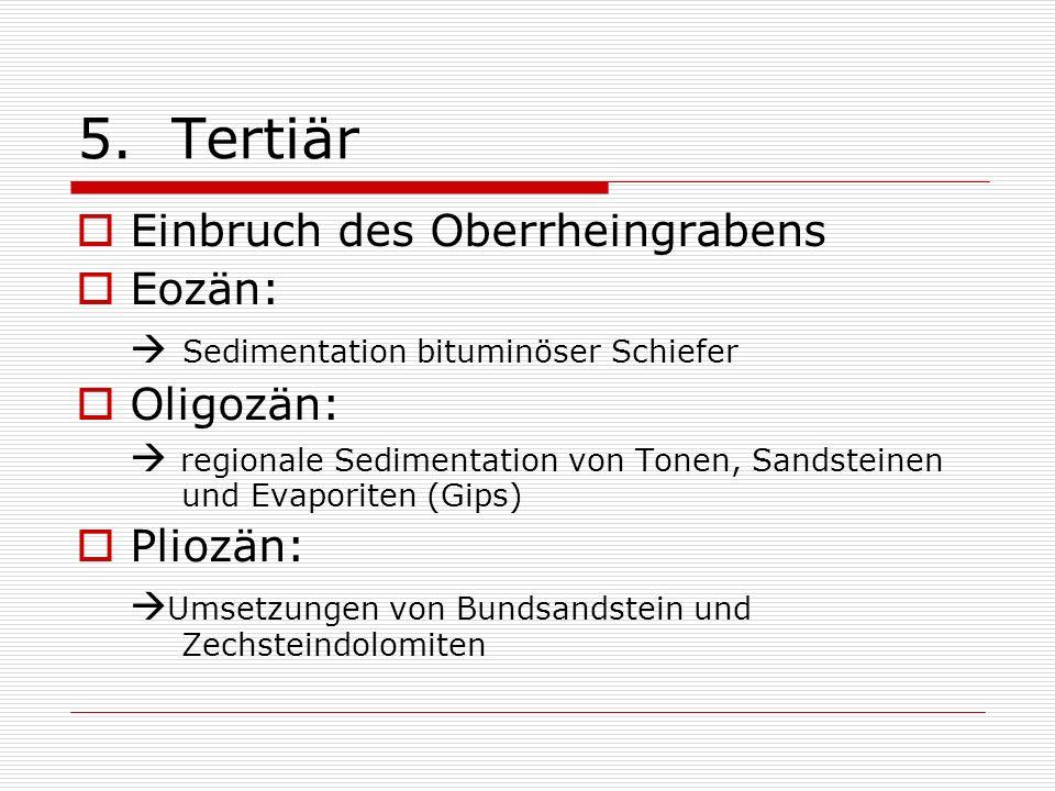 5. Tertiär Einbruch des Oberrheingrabens Eozän: Oligozän: Pliozän: