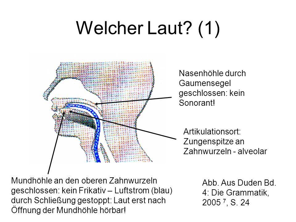 Welcher Laut (1) Nasenhöhle durch Gaumensegel geschlossen: kein Sonorant! Artikulationsort: Zungenspitze an Zahnwurzeln - alveolar.