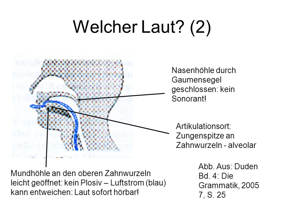 Welcher Laut (2) Nasenhöhle durch Gaumensegel geschlossen: kein Sonorant! Artikulationsort: Zungenspitze an Zahnwurzeln - alveolar.