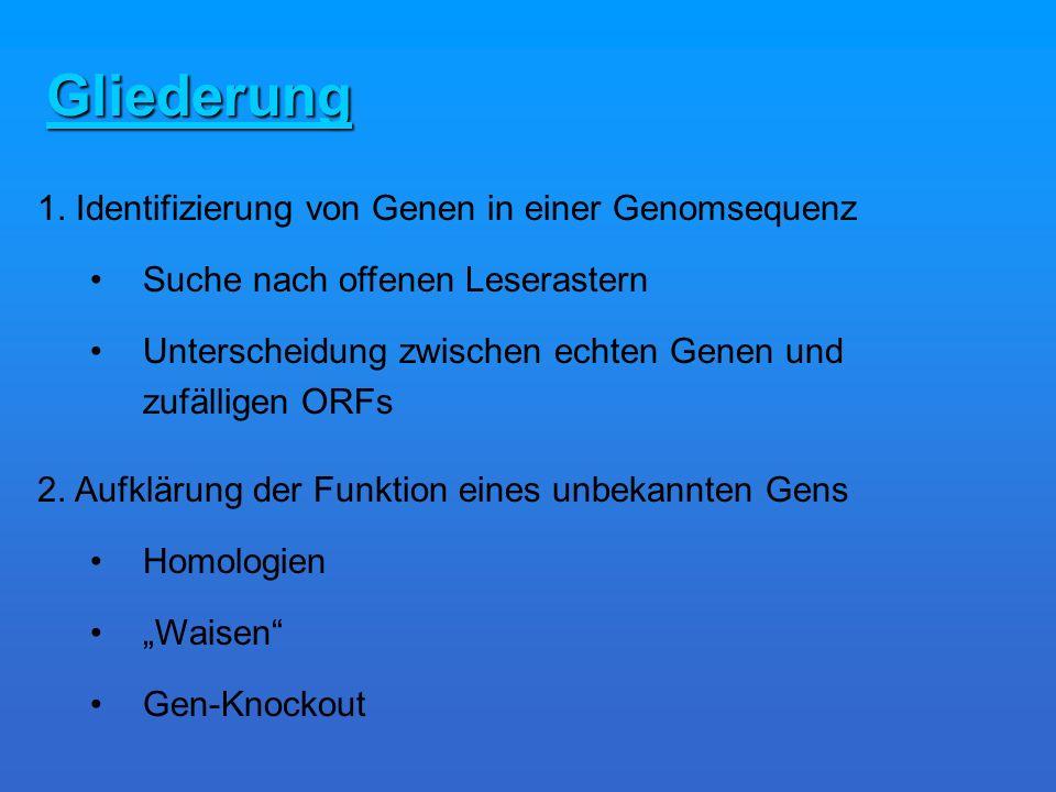 Gliederung 1. Identifizierung von Genen in einer Genomsequenz