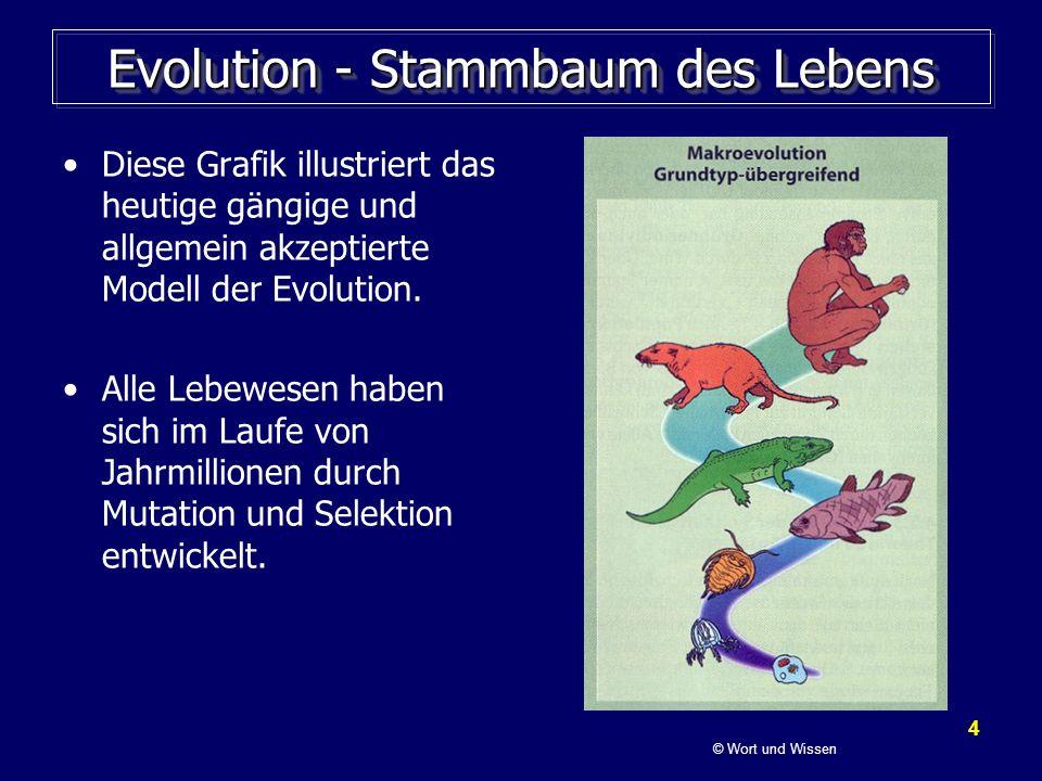 Evolution - Stammbaum des Lebens